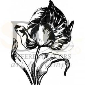 s-00371 old tulip